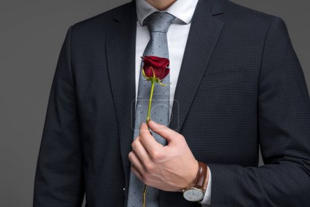 cropped view of man in suit holding red rose, isolated on grey