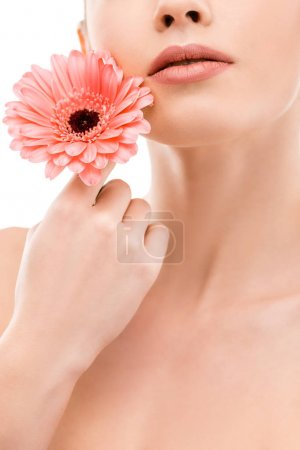 cropped view of girl with fresh skin holding gerbera, isolated on white