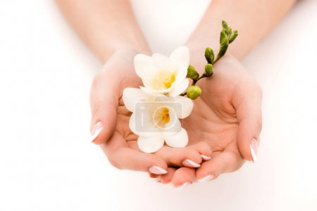 Cropped view of hands holding freesia, isolated on...