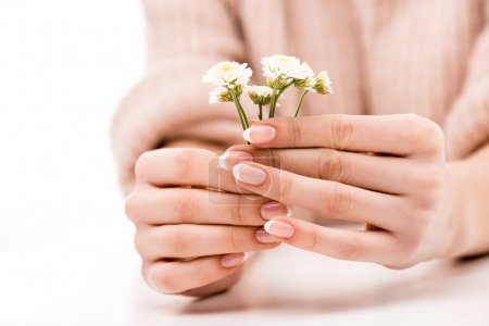cropped view of girl with natural manicure holding daisies, isolated on white