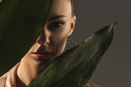 attractive young woman hiding behind green leaves, isolated on grey
