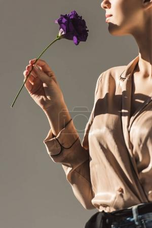 cropped view of woman holding purple flower, isolated on grey