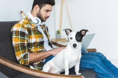 handsome man using laptop while sitting on sofa with dog