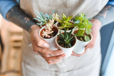close-up partial view of florist holding beautiful green succulents in pots