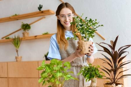 beautiful young florist in eyeglasses and apron holding green houseplant and smiling at camera