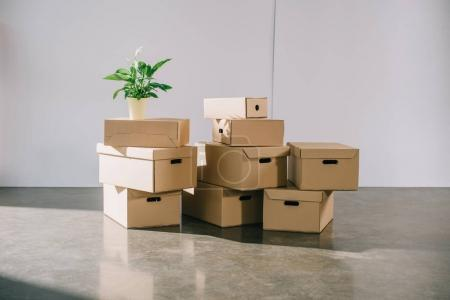 Photo for Stacked cardboard boxes and potted plant during relocation - Royalty Free Image