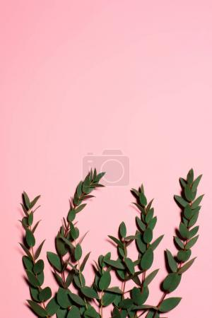 top view of green leaves on pink surface