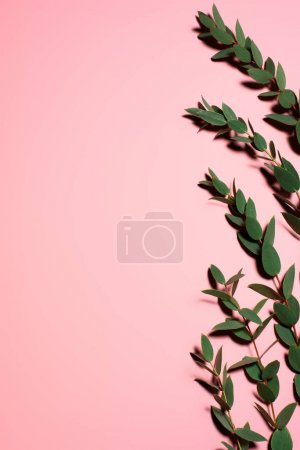 top view of beautiful green leaves on pink surface