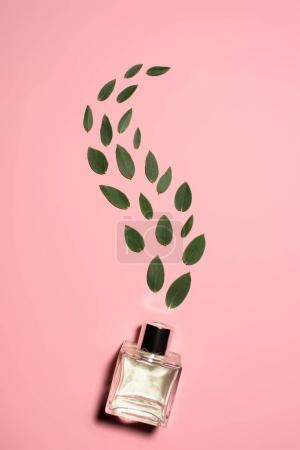 top view of glass bottle of perfume with composed green leaves on pink surface