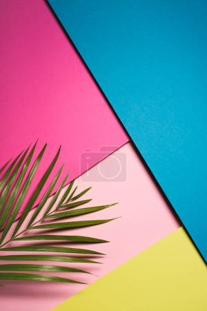 top view of green palm leaf over colorful surfaces