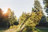 trees in autumn park