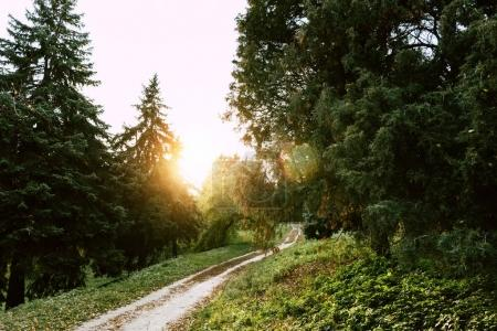 Photo for Footpath in beautiful autumn park at sunset - Royalty Free Image