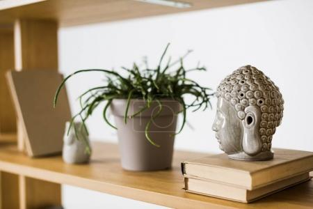 close up view of books and plant in flowerpot on wooden bookshelf