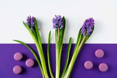 Photo for Top view of hyacinth flowers with macaron cookies on purple and white surface - Royalty Free Image