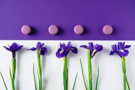 top view of iris flowers with macaron cookies on purple and white surface