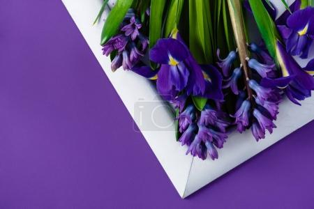 Photo for Top view of flowers on white frame on purple surface - Royalty Free Image