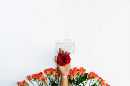 top view of hand on dummy with red rose and beautiful rose flowers isolated on white