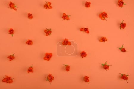 top view of beautiful blossoming rose flowers on red background