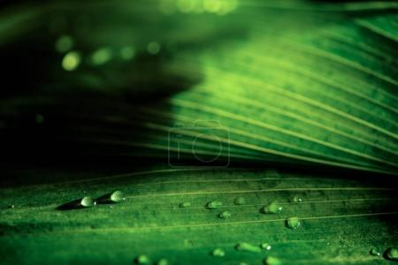 close-up view of green natural background with dew drops