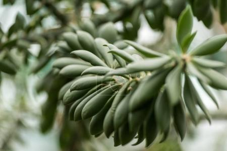 Photo for Close-up view of beautiful succulent plant with green leaves - Royalty Free Image