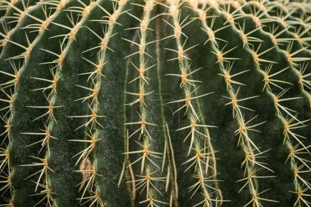 close-up view of beautiful green cactus with thorns