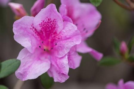 Foto de Flores de primer plano vista hermosa fresca floración violeta - Imagen libre de derechos