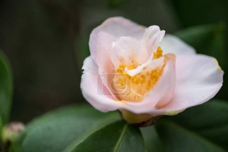 close-up view of beautiful tender blooming pink flower