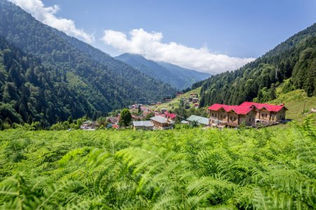 Landscape view of Ayder Plateau in Rize,Turkey.Ayder Valley is popular destination for summer tourism.