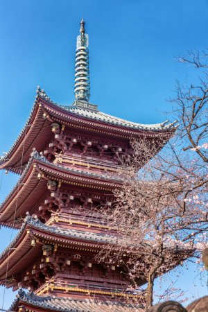 Beautiful tall pagoda in sakura flowers, blue sky, sunny