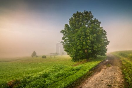 Photo for Morning hazy landscape in Adrspach - Teplice rocks, Czech republic, Europe. - Royalty Free Image
