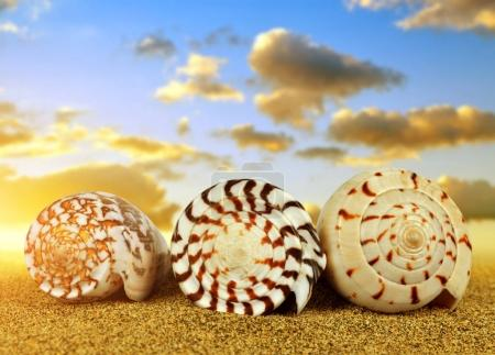 Tropical sea shells on sandy beach.