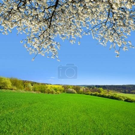 spring landscape in sunny day.