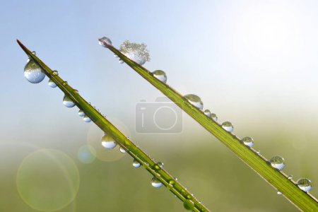 Frozen drops of dew on a blades of green grass.