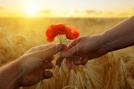 Hand gives a flower of poppies with love at sunset.
