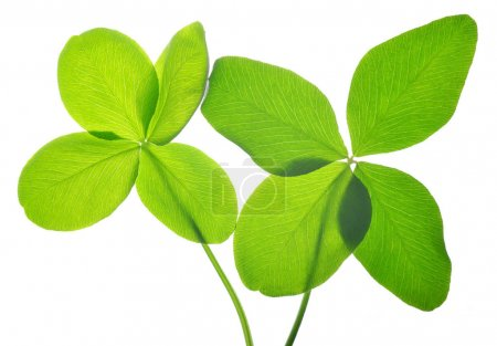 Four leaf clovers.