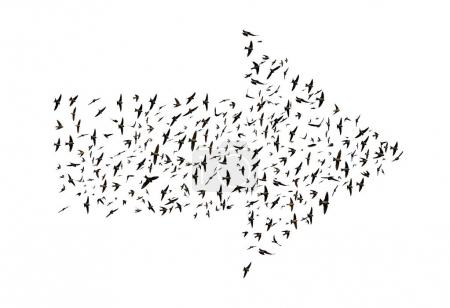 Birds flying in arrow formation isolated on a whit...