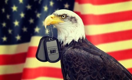 Bald Eagle holds a dog tags in his beak against a American Flag.