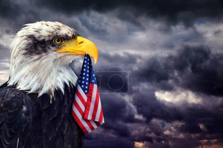 The Bald Eagle holds in the beak of the United States Flag on the background dark cloudy sky. Patriotic concept.