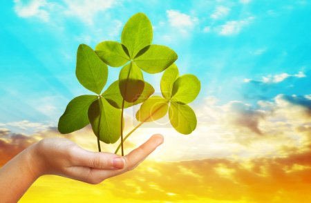 Four leaf clovers in hand against sunset sky. Lucky concept.
