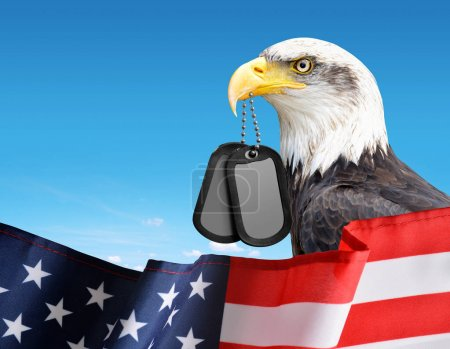 Bald Eagle holds a dog tags in his beak. In the foreground a American Flag. Veterans Day Concept.
