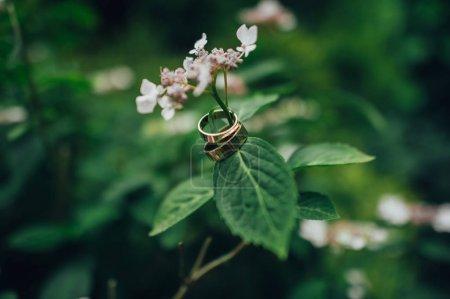 Photo pour Paire de bagues de mariage or suspendu à fleur de la tige - image libre de droit