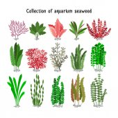 Seaweed set vector illustration Yellow and brown red green aquarium seaweeds biodiversity isolated on white