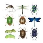 Постер, плакат: Set of different insects