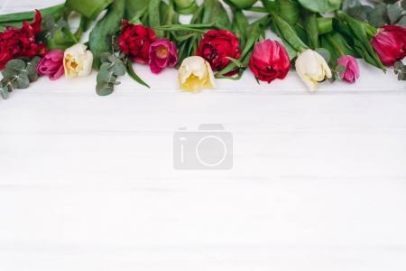 View of tulips gathering in border on wooden planks background