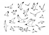 Sketch of flying seagulls Set of sea gulls in different positions Hand drawn vector illustration isolated on white background