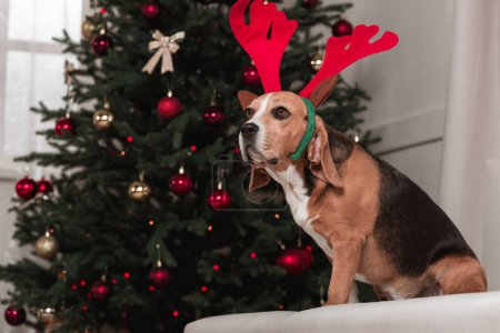 beagle dog with christmas tree