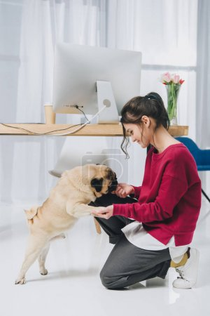 Pretty lady playing with pug by working table in cozy room