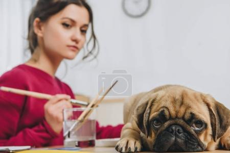 Cute pug waiting for female owner to finish drawing