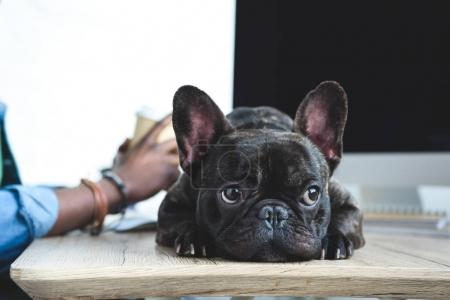 Photo for Bored dog waiting for African american man to finish work by computer - Royalty Free Image