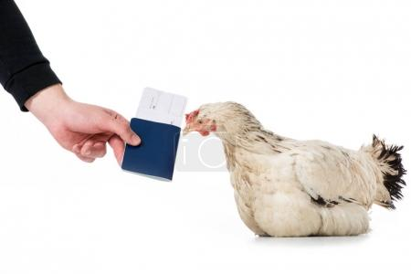 cropped shot of person giving passport with ticket to hen isolated on white